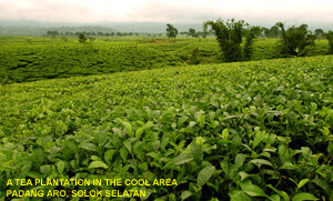 investasi hortikultura