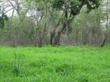 Hutan Alami Taman Nasional Baluran