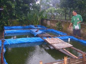 kolam terpal lele