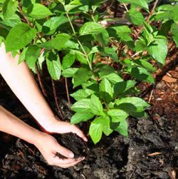 ilustrasi pupuk kompos organik