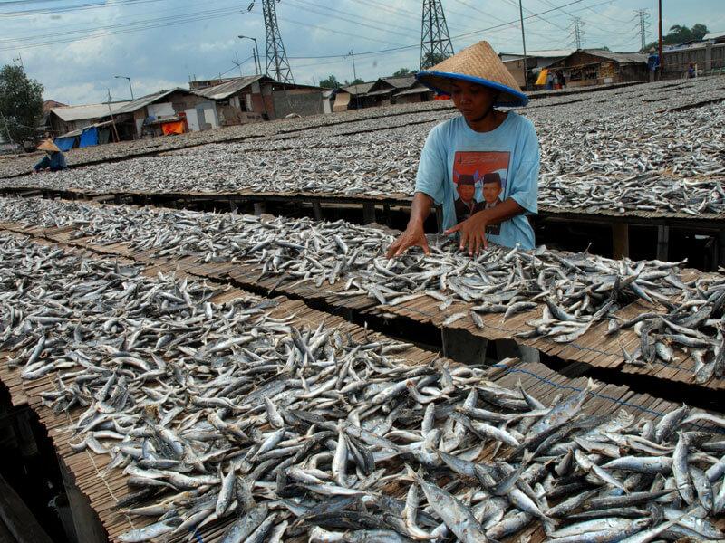 Potensi Bisnis Hasil Olahan Ikan