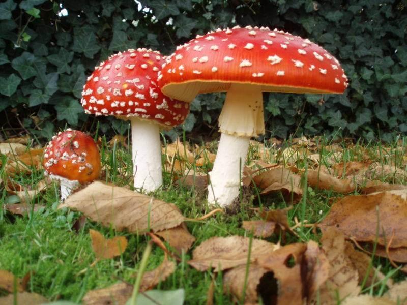 ciri-ciri jamur