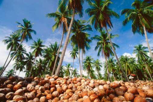 Potensi Sumber Daya Alam Di Provinsi Gorontalo
