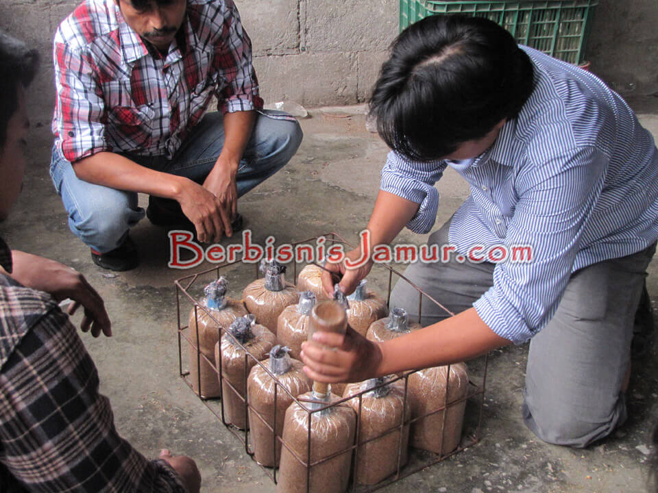 Proses Pembuatan Bibit Jamur Tiram
