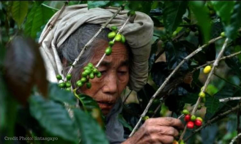 petani-kopi