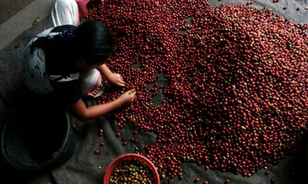ternyata-kopi-starbucks-pun-menggunakan-kopi-asli-indonesia-ini