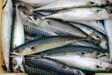 resep-membuat-bakso-ikan