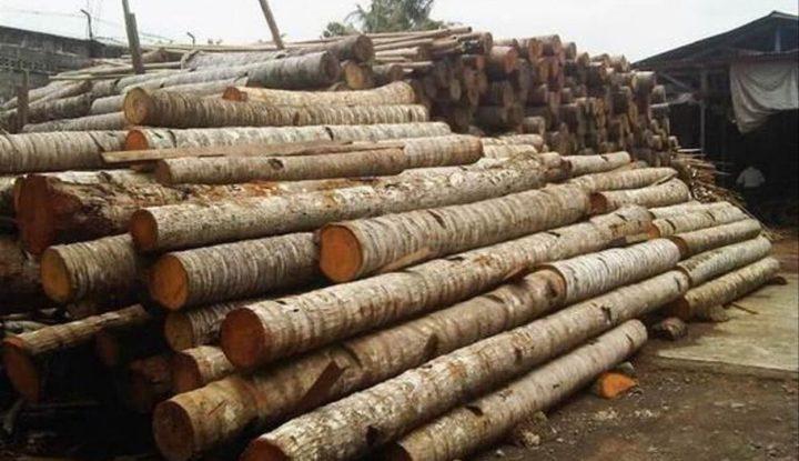 penasaran-sama-bisnis-kayu-kelapa-yuk-simak-penjelasanya