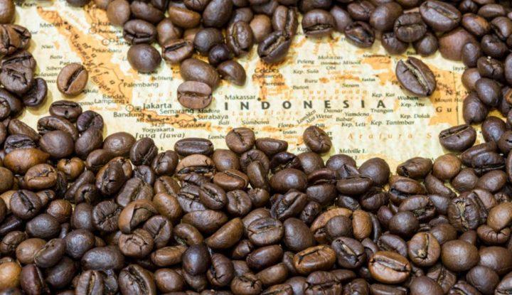mau-usaha-kopi-wajib-kenali-dulu-jenis-kopi-indonesia