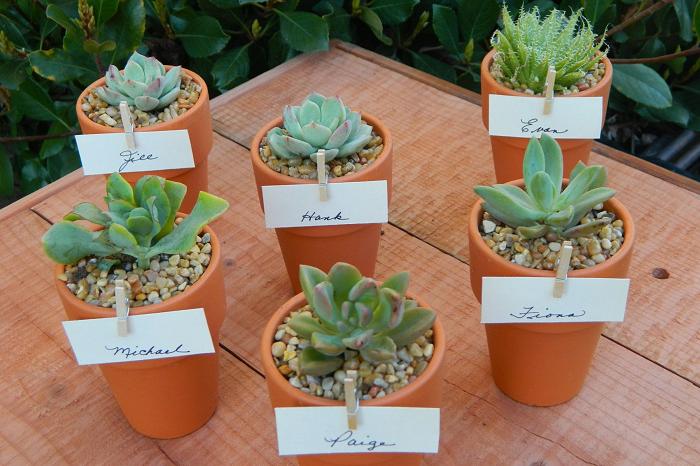 Bisnis Kaktus Hias Peluang Usaha Rumahan Menguntungkan