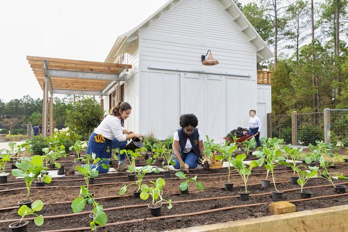 Ide Bisnis Yang Menguntungkan Dari Berkebun Di Rumah