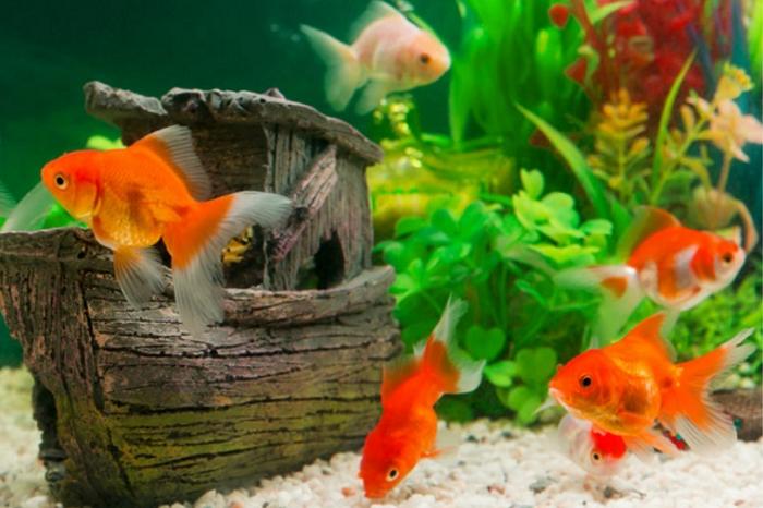 Tips Sukses Bisnis Ikan Hias Dari Rumah Untung Menjanjikan