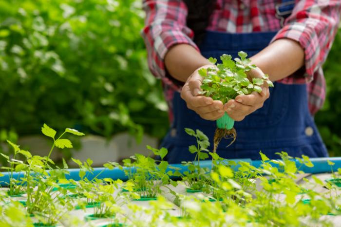 Bisnis Pertanian Modal Kecil, 5 Ide Ini Perlu Dicoba!