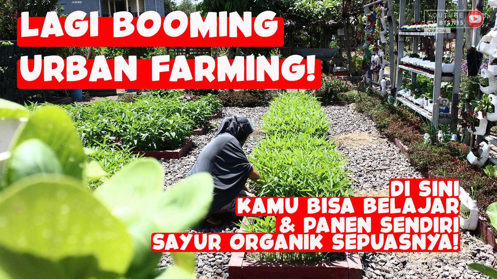 Konsep-Urban-Farming-Pertanian-Ramah-Lingkungan-Di-Caping-Merapi
