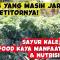 Sayur-Kale-Superfood-Kaya-Manfaat-Nutrisi-Bisnis-Yang-Masih-Jarang-Kompetitornya