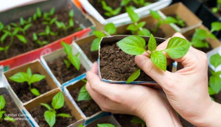 Peluang Bisnis Menguntungkan Dari Berkebun di Halaman Rumah!