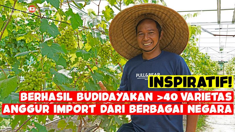 Sukses Bisnis Budidaya Anggur Impor Sampai Puluhan Varietas!