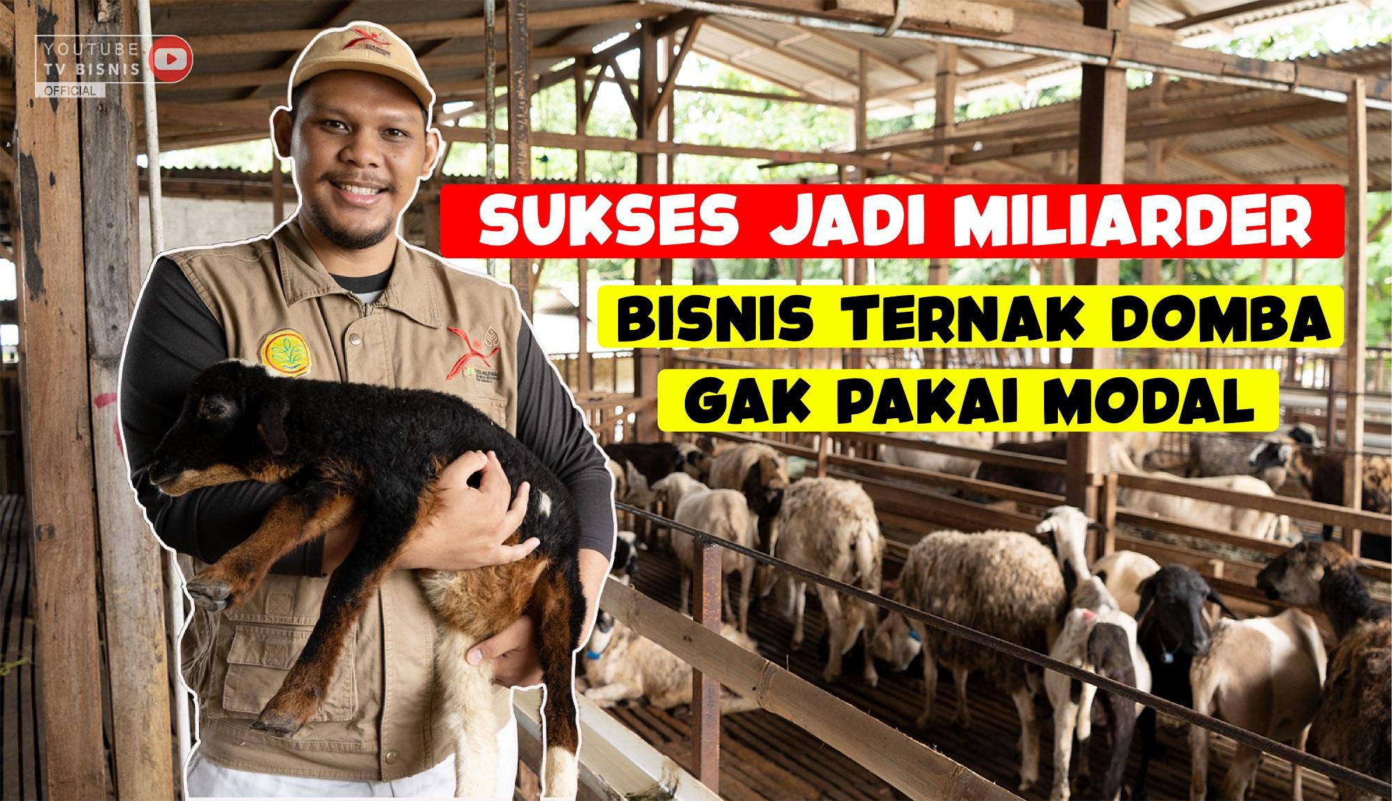 Kisah Sukses Bisnis Ternak Domba Nggak Pake Modal!