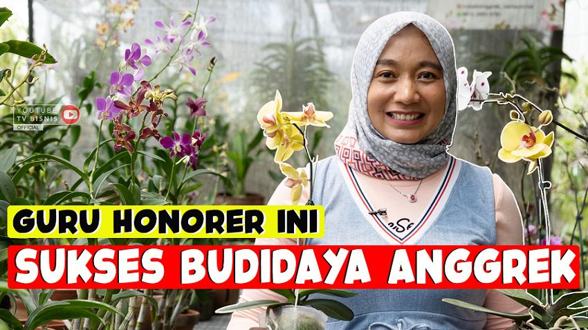 Kisah Sukses Guru Honorer Bisnis Budidaya Tanaman Anggrek