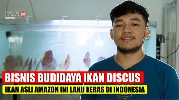 Budidaya Ikan Discus Asal Amazon Laku Keras di Indonesia!