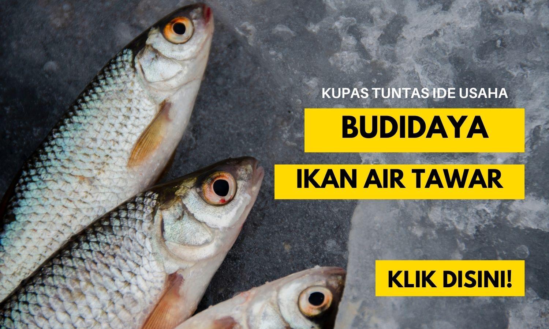 peluang usaha budidaya ikan air tawar