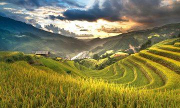 Pentingnya-Asuransi-Pertanian-Untuk-Perlindungan-Usaha-Petani-1