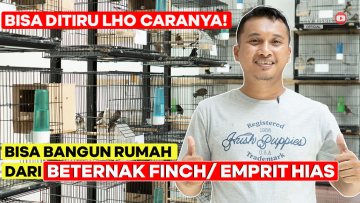 Jatuh Bangun Ternak Burung Finch Hingga Sukses Bangun Rumah